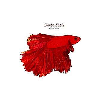 Betta splendens poisson rouge vecteur dessiné à la main.