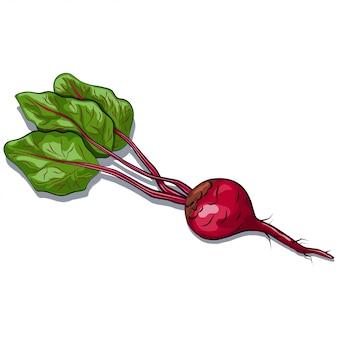 Betterave rouge avec vecteur de feuilles vertes isolé sur blanc
