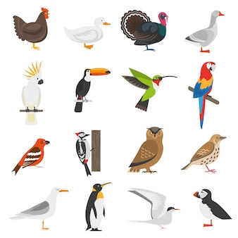 Bird flat color icons set