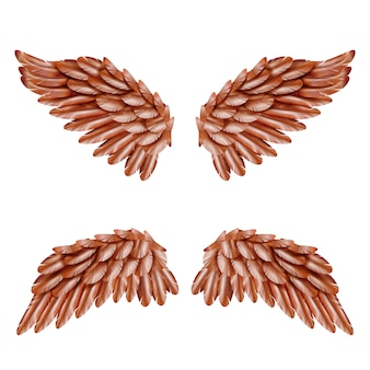 Bird wing set