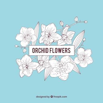 Bleu cadre de fleurs d'orchidée