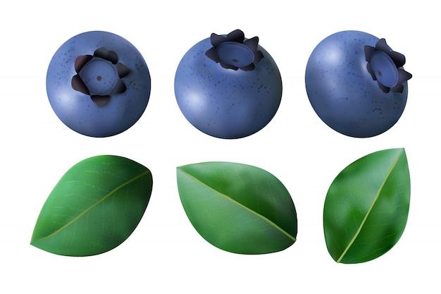 Bleuets et feuilles isolés sur blanc