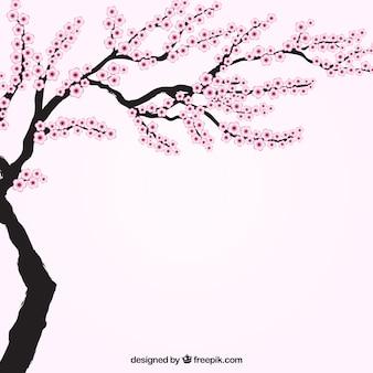 Blooming cerisier