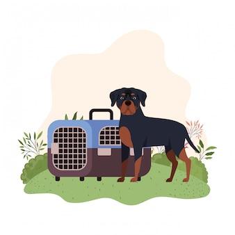 Boîte de transport pour chien et animal de compagnie avec paysage