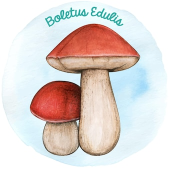 Boletus de champignons dessinés à la main watercoor