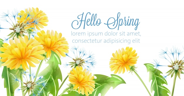 Bonjour bannière de printemps avec des fleurs de pissenlit jaune