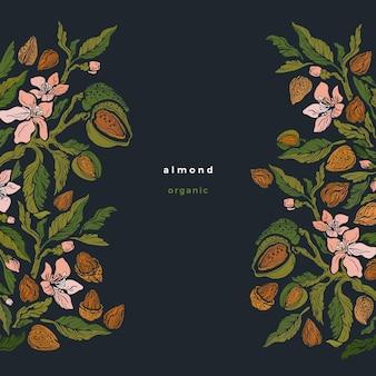 Bordure d'amande branche botanique noix brutes décoration fleur et pétale feuilles graphique vintage