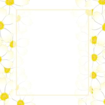 Bordure de carte de fleur de cosmos blanche