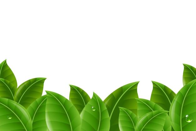 Bordure de feuilles vertes