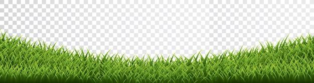 Bordure d'herbe verte sur fond transparent.