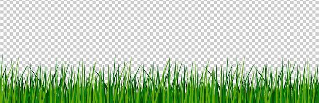 Bordure d'herbe verte.