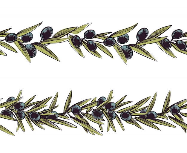 Bordure olive. grèce branches sans soudure cadre olive branche