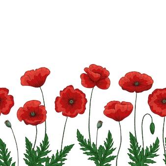 Bordure sans faille avec des fleurs de pavot rouge. papaver. tiges et feuilles vertes.