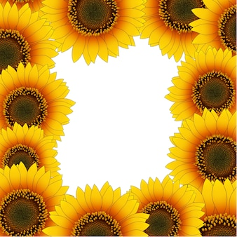 Bordure de tournesol jaune orange isolé sur fond blanc