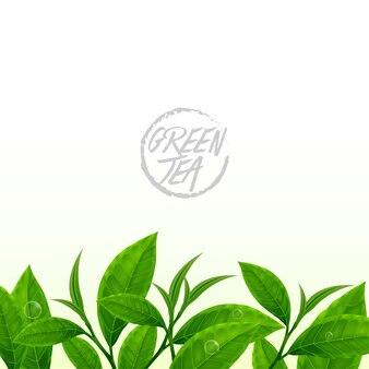 Bordure transparente de feuilles de thé vert