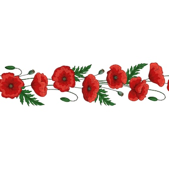 Bordure transparente. fleurs de pavot rouge. papaver. tiges et feuilles vertes.