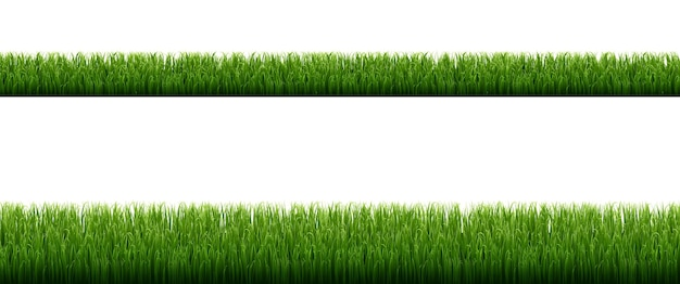 Bordures d'herbe verte