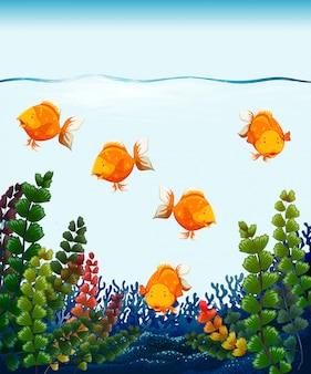 Bouchent le poisson rouge dans le réservoir