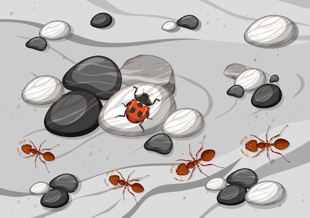 Bouchent la scène aérienne avec de nombreuses fourmis et une coccinelle