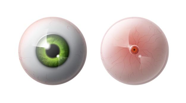 Boule de l'oeil humain réaliste avec iris vert avant, vue arrière close up isolé sur fond gris