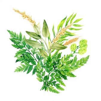Bouquet aquarelle à base de plantes avec des fougères et des oreilles, dessinés à la main