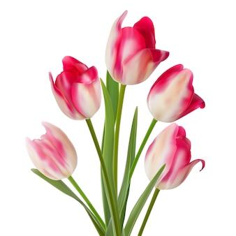 Bouquet de cinq fleurs sur blanc.