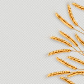 Bouquet d'épis de blé, illustration réaliste de grains entiers séchés