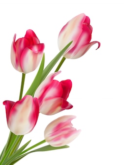 Bouquet de fleurs sur fond blanc.