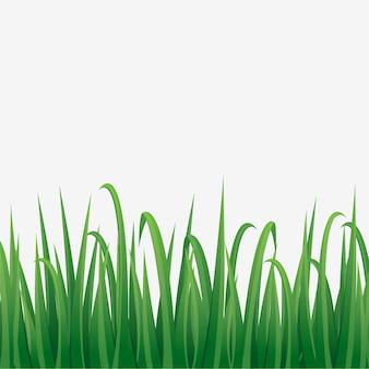 Bouquet d'herbe avec fond blanc, illustration vectorielle