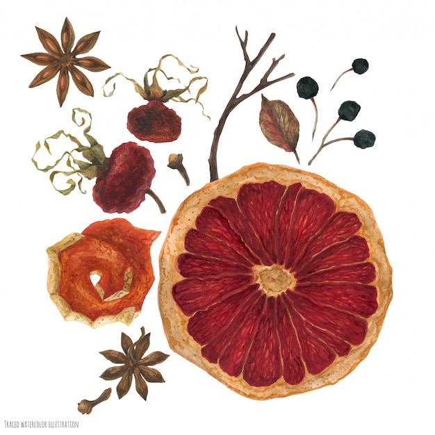 Bouquet d'hiver avec des oranges séchées et des plantes d'hiver