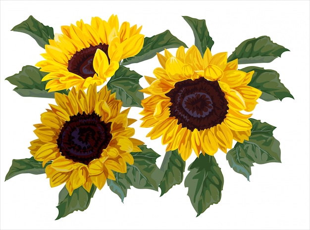 Bouquet de tournesol