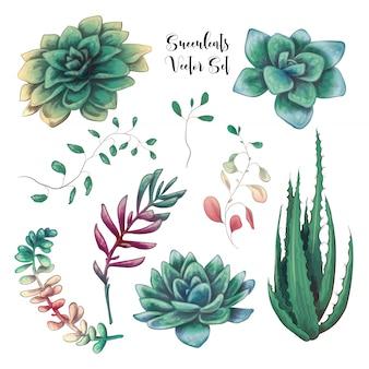 Bouquets succulents colorés verts vector objets de design.