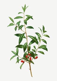 Branche de l'alabama dahoon