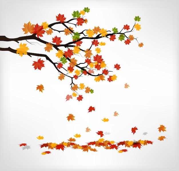 Branche d'automne avec des feuilles qui tombent