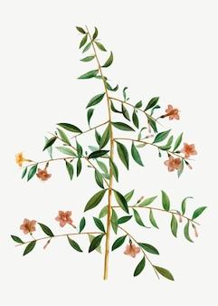 Branche de baies de goji