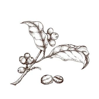 Branche de café et haricot