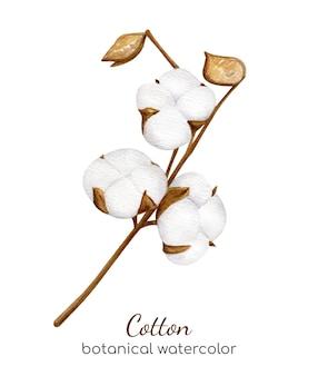 Branche de coton aquarelle avec des fleurs blanches duveteuses