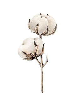 Branche de coton aquarelle