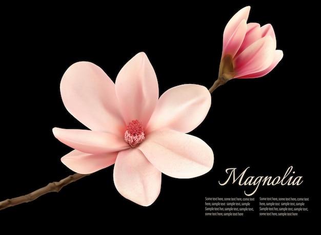 Branche avec deux fleurs de magnolia rose.