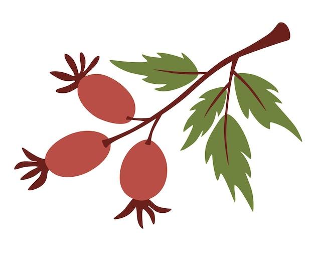 Branche d'églantier. de jolies brindilles avec des baies. baies d'églantier sauvage rouge sur une branche avec des feuilles vertes. conception botanique pour les cosmétiques biologiques, la médecine. illustration vectorielle pour la conception d'aliments sains ou de la nature.