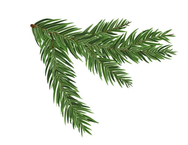 Branche d'épinette ou de pin luxuriante verte. branche de sapin isolée sur élément de noël blanc.