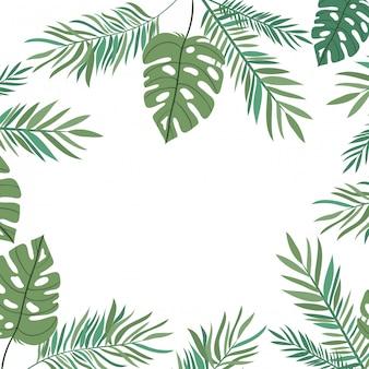 Branche, feuille, été, blanc, fond