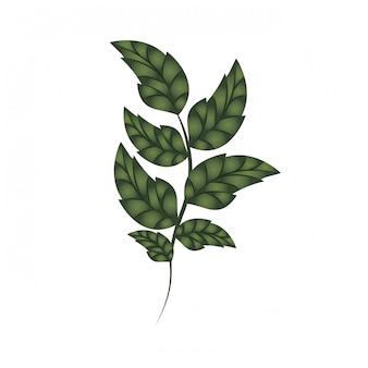 Branche avec feuilles icône isolé