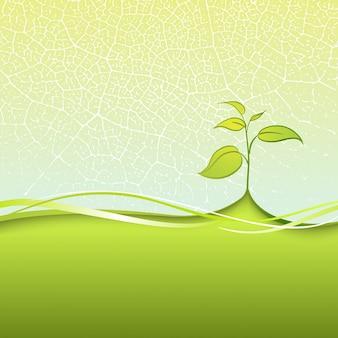 Branche avec des feuilles
