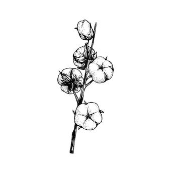 Branche de fleur de coton. illustration de style croquis dessinés à la main de coton écologique naturel. vintage gravé. art botanique sur fond blanc.