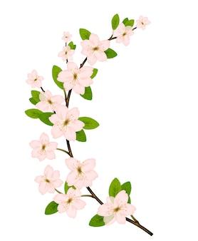 Branche fleurie avec fleur de printemps rose.