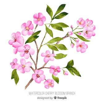 Branche de fleurs de cerisier aquarelle