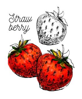 Branche de fraise noire aquarelle sur fond blanc