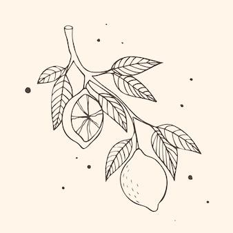 Branche de fruits aux citrons