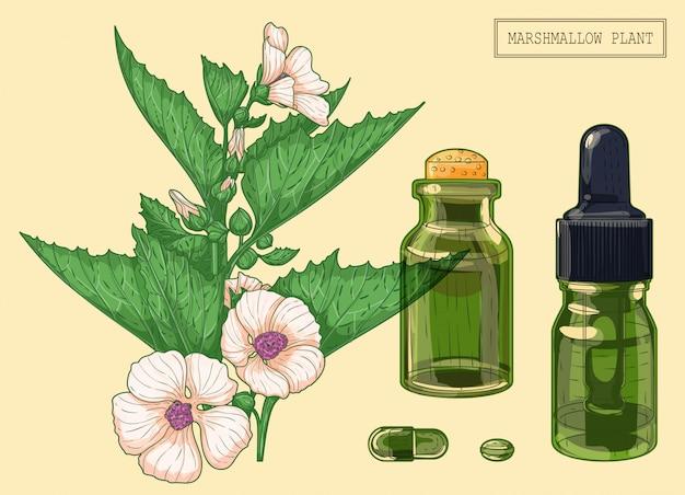 Branche de guimauve et deux flacons, illustration botanique dessinée à la main dans un style moderne branché